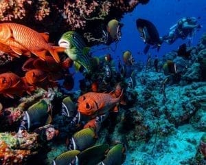 Best Dive Resort Maldives- Bandos Island guide.