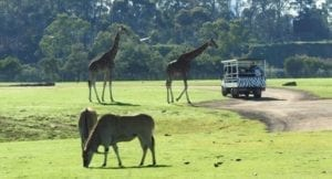 Read more about the article Werribee Zoo – a popular family day out.