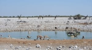 Etosha National Park- unique and fully accessible